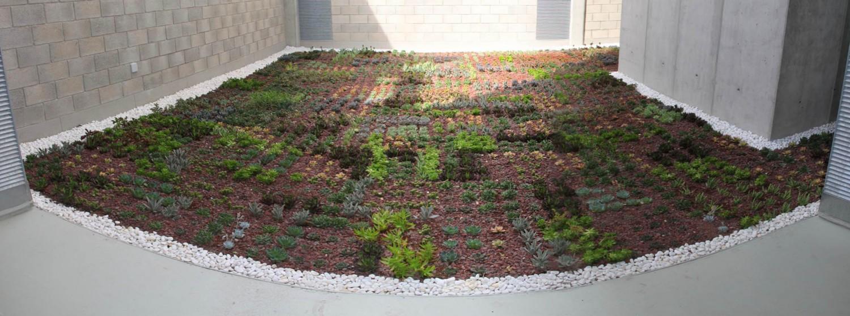 Cubierta vegetal- imagen inferior